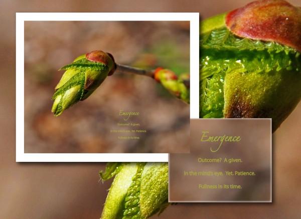 Emergence for website revised