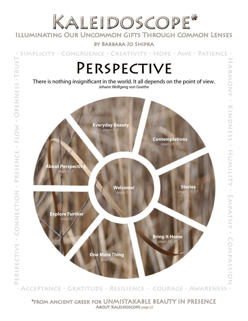 perspective-cover